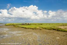 Dutch part of the Wadden Sea - Wadden Sea: A group of mudflat hikers crossing the Wadden Sea, the mudflats are still bare, the sand flats are covered by sea grasses,...