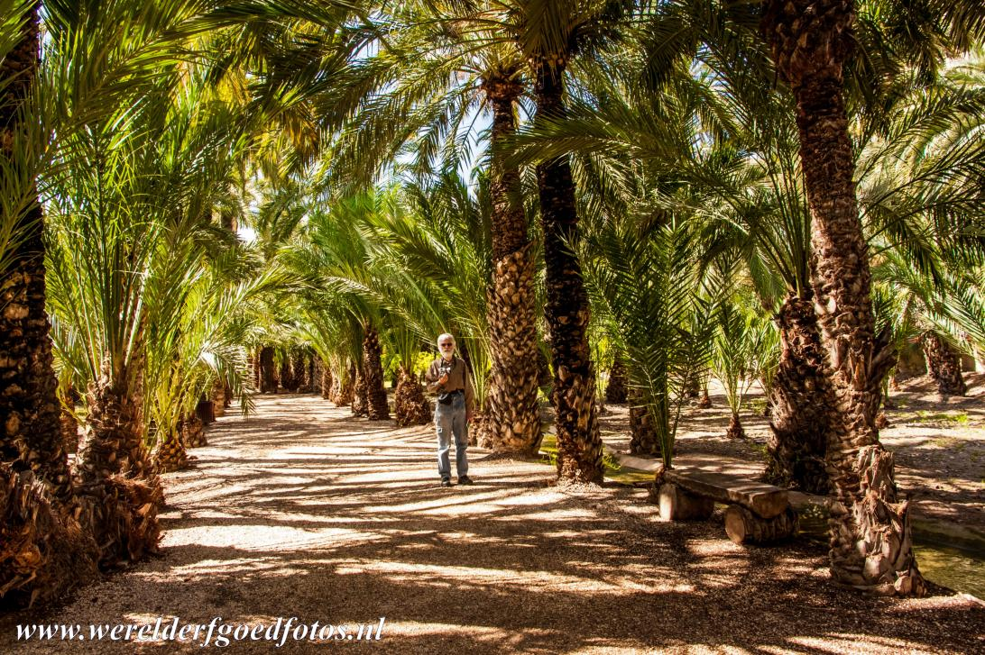 Palmeral of Elche - Shaded by date palm trees, you can take a walk through the Palmeral of Elche. The Palmeral of Elche is one of the largest palm groves in the world...
