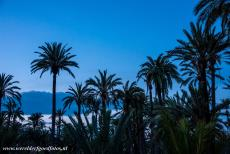 Palmeral of Elche - The Palmeral of Elche by night. The Palmeral of Elche is one of the largest palm groves in the world and the largest palm grove in Europe. The...