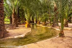 Palmeral of Elche - Palmeral of Elche: The palms are planted along a network of irrigation canals, the water comes from the River Vinalopó, the irrigation...