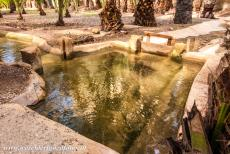 Palmeral of Elche - Palmeral of Elche: A small wooden sluice gate in one of the irrigation canals, the sluice gates are used to control the flow of water in the...