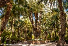 Palmeral of Elche - The Palmeral of Elche: A famous date palm is the Imperial Palm, the Palmera Imperial. The palm is named after Empress Elisabeth of...