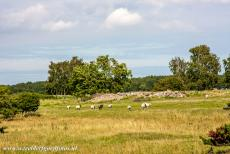 Agricultural Landscape of Southern Öland - Agricultural Landscape of Southern Öland: An ancient grave field nearby the Stora Alvaret, the Great Alvar. The Stora Alvaret is...