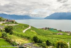 Lavaux, Vineyard Terraces - Lavaux Vineyard Terraces: There is some evidence that vines were grown in the Lavaux region in Roman times, but the present vineyard terraces...