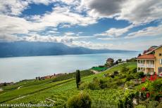 Lavaux, Vineyard Terraces - Lavaux Vineyard Terraces: The Lavaux is also called the 'Land of Three Suns', the direct sunlight, the sun rays reflected from the...
