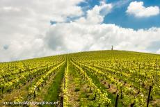 Champagne Hillsides - Champagne Hillsides, Houses and Cellars: Champagne is the name of the most celebrated sparkling wine in the world, Champagne is also the...