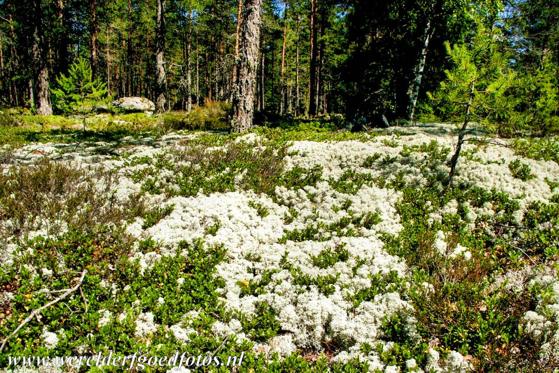 Sammallahdenmäki - Bronze Age Burial Site of Sammallahdenmäki: Burial cairns covered with reindeer moss. The most important granite burial cairns of...