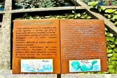 Botanical Garden (Orto Botanico) of Padua - Botanical Garden (Orto Botanico), Padua: The information boards in braille allows blind people to recognize plants by smelling and...