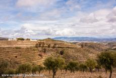 Alto Douro Wine Region - Alto Douro Wine Region: The terraced vineyards and a quinta, a wine-producing farm. There are also fig and olive orchards in the Alto Douro...