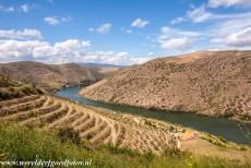 Alto Douro Wine Region - The terraced vineyards of the Alto Douro Wine Region are situated along the river Douro and its tributaries....