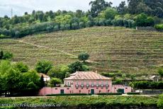 Alto Douro Wine Region - Alto Douro Wine Region: Terraced vineyards surround a quinta, a Portuguese wine-producing farm. On the steep and rocky slopes vines have been...